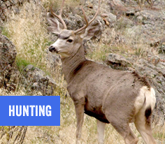 Hunting in Hope County, Montana