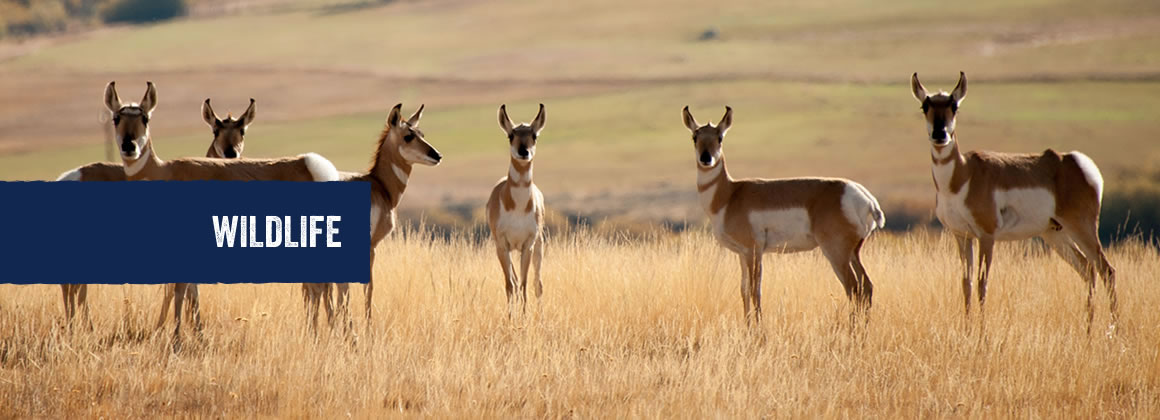 Wildlife in Hope County, Montana